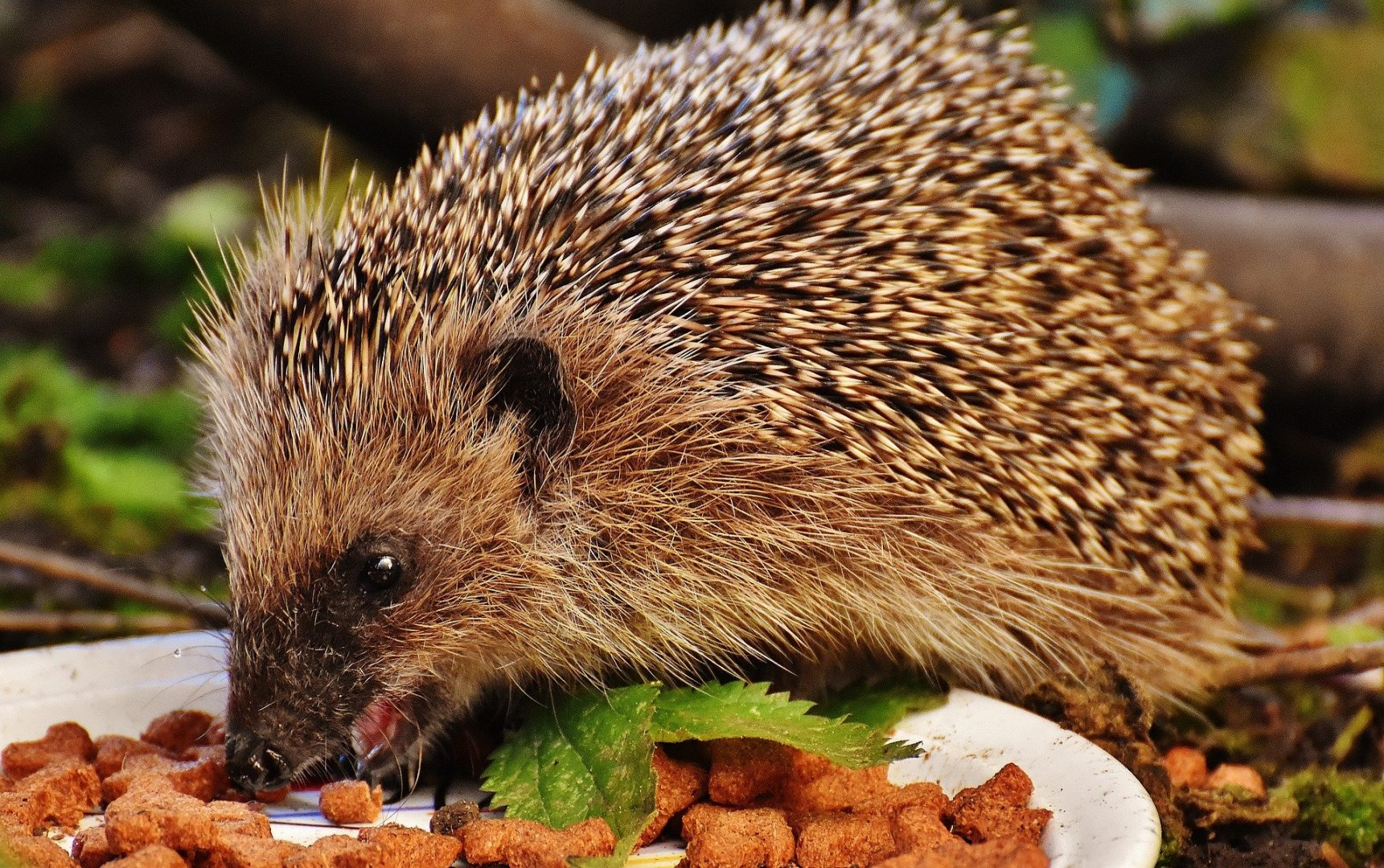 If this hedgehog was self employed this meal would count as an allowable expense